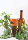 Beer and hop Royalty Free Stock Images
