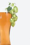 Beer and hop Royalty Free Stock Photo