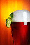 Beer and hop closeup Royalty Free Stock Photo