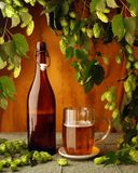Beer and hop plant Stock Photos