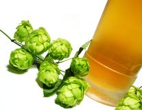 Beer and hop-plant stock photography