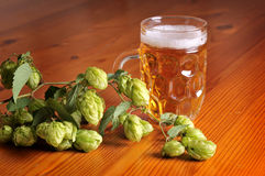 Beer and hops stock photos