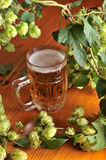 Beer and hops Royalty Free Stock Image