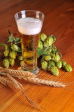 Beer and hops Royalty Free Stock Photos