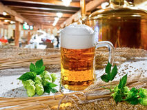 Beer and hops Stock Image