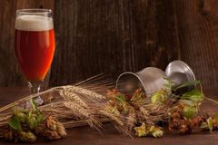 Beer with hops and barley. A glass of dark beer with beer foam hat. In the foreground ears of barley and fresh hops - brewing raw materials. Focus on barley ears Royalty Free Stock Photo