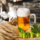 Beer and hops and barley Stock Photos
