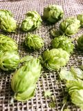 Beer hops flowers Stock Photography