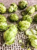 Beer hops flowers Royalty Free Stock Photo