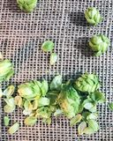 Beer hops flowers Stock Photos