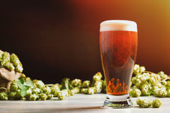 Beer & Hops Royalty Free Stock Photography