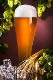 Beer and hops with ice Stock Images