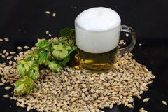 Beer, Hops and Malt. A glass of beer with malt and hops Royalty Free Stock Image