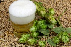 Beer, hops and malt. A glass of beer with malt and hops Royalty Free Stock Photography