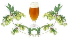 Beer and hops-plant Stock Image