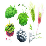 Beer Hops in Watercolour Royalty Free Stock Images