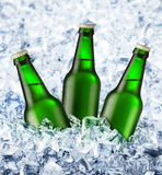 Beer is in ice. Three bottles of beer stand in ice stock image