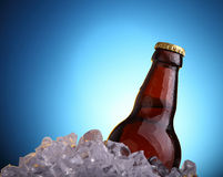 Beer in ice. Bottle of beer in ice cubes on the blue background Stock Photo