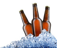 Beer in ice Royalty Free Stock Image
