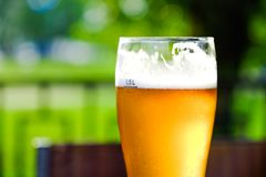Free Beer In A Glass Glass Glass, Bubbles Rise. On The Background Of Green Foliage Glass With Golden Drops. Royalty Free Stock Photo - 121971485