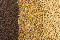Beer Ingredients. Pale malt, crystal malt, chocolate malt Stock Photos