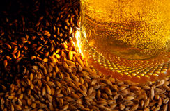 Beer and ingredients. Pale malt, crystal malt, chocolate malt and beer Stock Image