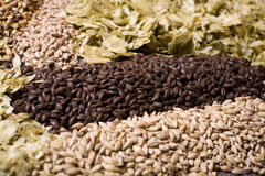 Beer Ingredients. Pale malt, crystal malt, chocolate malt, wheat malt and aromatic hops Royalty Free Stock Photos