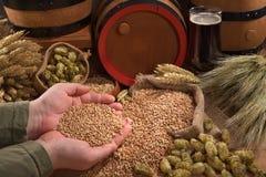 Beer ingredients Stock Images