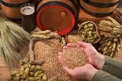 Beer ingredients Royalty Free Stock Image