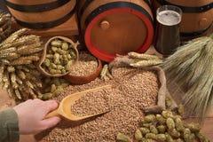 Beer ingredients Stock Photos