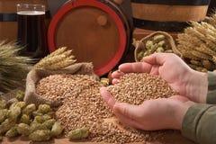 Beer ingredients Stock Photo