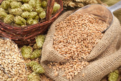 Beer ingredients Royalty Free Stock Image