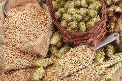 Beer ingredients Stock Photos