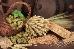 Beer ingredients Stock Images