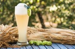 Beer kvass malt hops. Large glass beer, kvass, malt, hops barley ears natural background Stock Photos