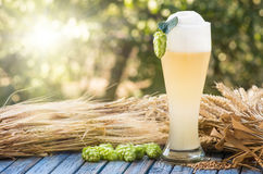Beer kvass malt hops. Large glass beer, kvass, malt, hops barley ears natural background Royalty Free Stock Photos
