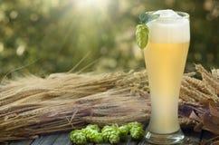 Beer kvass malt hops. Large glass beer, kvass, malt, hops barley ears natural background Stock Photo