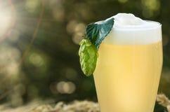 Beer kvass malt hops. Large glass beer, kvass, malt, hops barley ears natural background royalty free stock photography