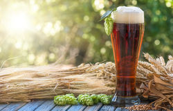 Beer, kvass malt hops. Large glass dark beer, kvass, malt, hops, barley ears standing on an old wooden table dyeing, natural background Stock Images