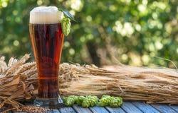 Beer, kvass malt hops. Large glass dark beer, kvass, malt, hops, barley ears standing on an old wooden table dyeing, natural background Royalty Free Stock Image