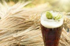 Beer, kvass malt hops. Large glass dark beer, kvass, malt, hops, barley ears standing on an old wooden table dyeing, natural background Stock Photos