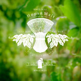 Beer label with sheaf spikelet and hop on blurred background Royalty Free Stock Photo