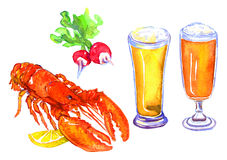 Beer, lobster and radish. Hand Painted Watercolor Illustration: Beer and snacks lobster and radish Stock Photo