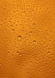 Beer macro. Natural fresh beer macro shot royalty free stock photos
