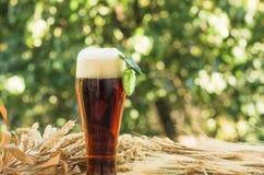 Beer malt hops, background. Large glass of dark beer, malt, hops, barley ears standing on an old wooden table dyeing, natural background Stock Image