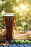 Beer malt hops, background. Large glass of dark beer, malt, hops, barley ears standing on an old wooden table dyeing, natural background Stock Photos