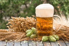 Beer malt hops, background. Large glass of light beer, malt, hops, barley ears standing on an old wooden table dyeing, natural background Stock Photo