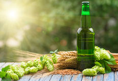 Beer malt hops. Green bottle of beer, hops, malt, barley ears standing on an old table on natural background Stock Photography