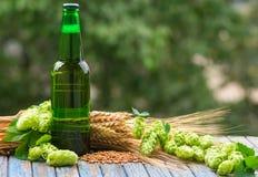 Beer malt hops. Green bottle of beer, hops, malt, barley ears standing on an old table on natural background Royalty Free Stock Photography