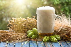 Beer malt hops. Large glass of light beer, malt, hops, barley ears standing on an old wooden table dyeing, natural background Royalty Free Stock Photography